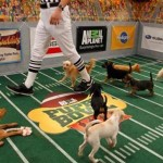 2014 Puppy Bowl Preview