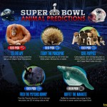 2015 Super Bowl Animal Picks and Predictions