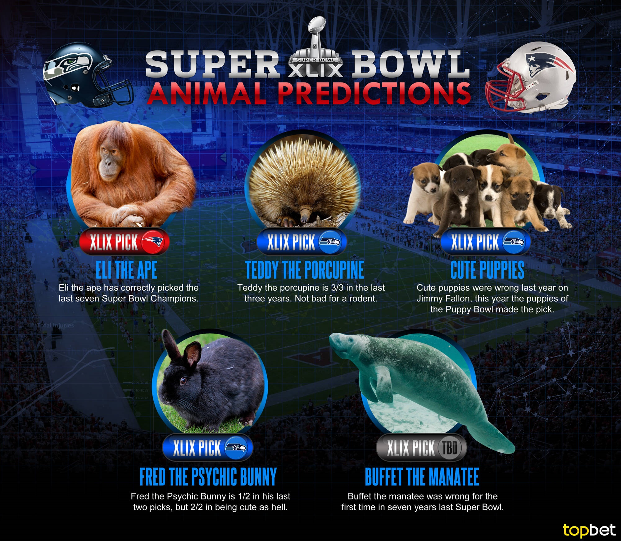 super bowl betting bowl predications