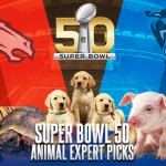 NFL Super Bowl 50 Animal Expert Picks & Predictions 2016
