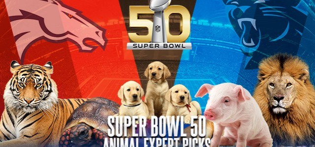 online super bowl nfl betting expert picks