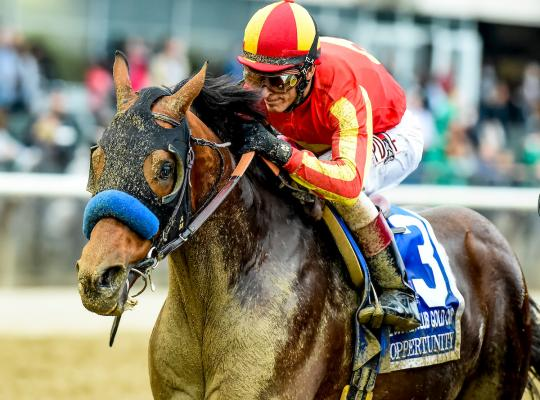 2016 Breeders Cup Predictions Picks Odds Amp Betting Preview