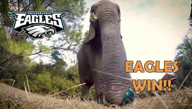 Animal Super Bowl Predictions 2018 Elephant