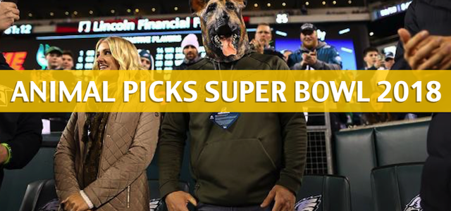 Animal Super Bowl Predictions and Picks 2018