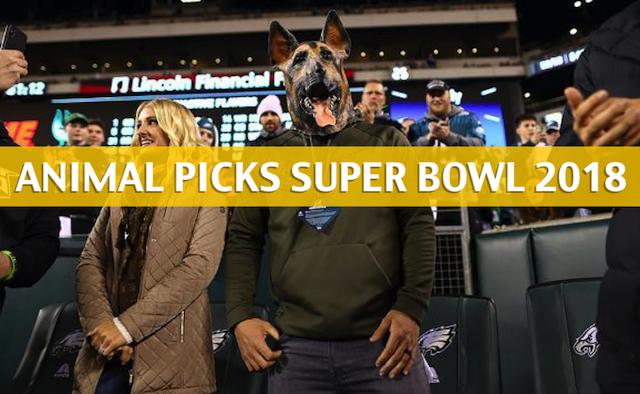 2018 Super Bowl odds