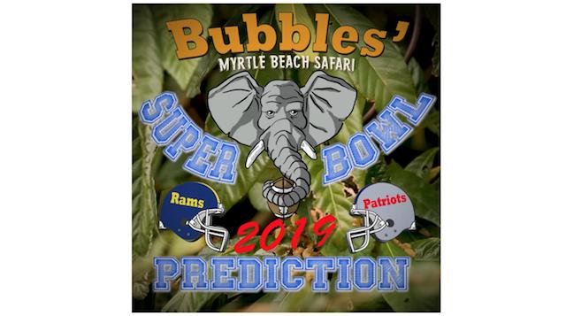Animal Expert Picks Super Bowl 2019 Bubbles Elephant - Myrtle Beach Safari