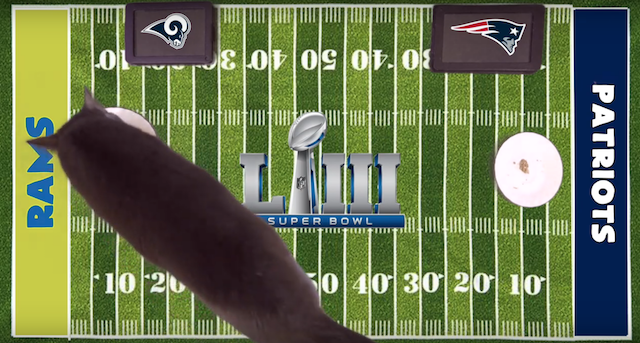 Animal Super Bowl Predictions and Picks 2019 Cass the Cat