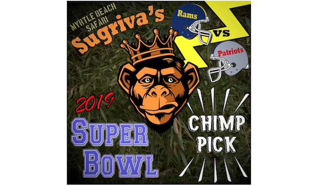 Super Bowl Animal Expert Picks 2019 - Monkey