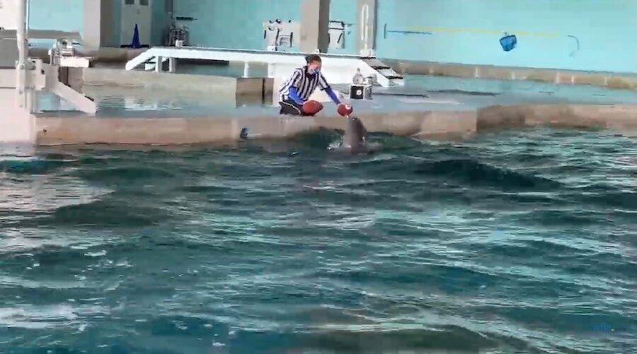 Animal Super Bowl Predictions and Picks 2021 - Dolphin